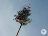 Kindernarrenbaum