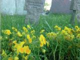 Grafb auf Meßkircher Friedhof