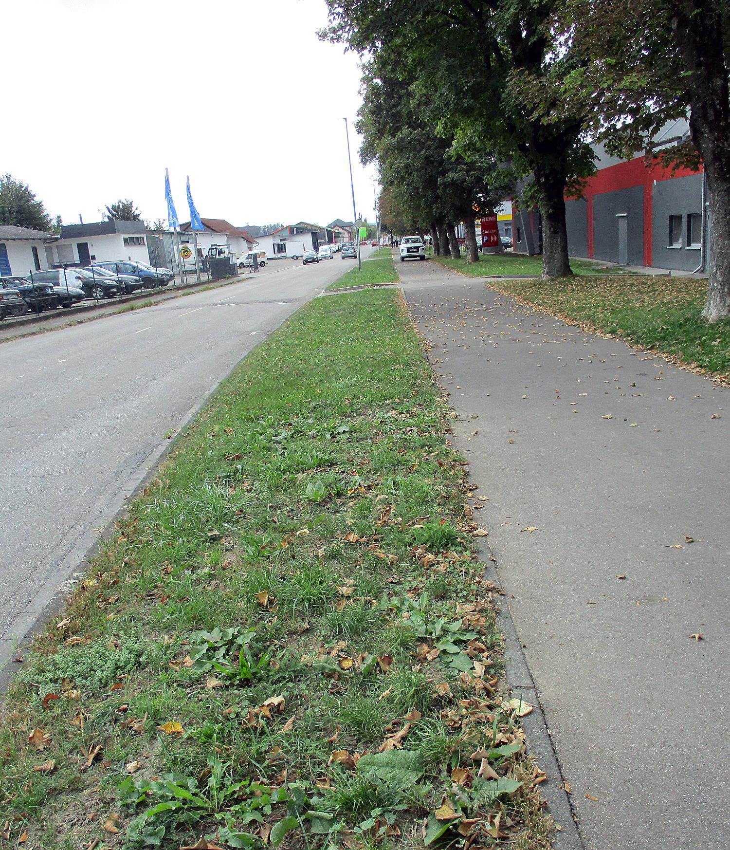 Straßenraumumgestaltung zur Stärkung der Biodiversität